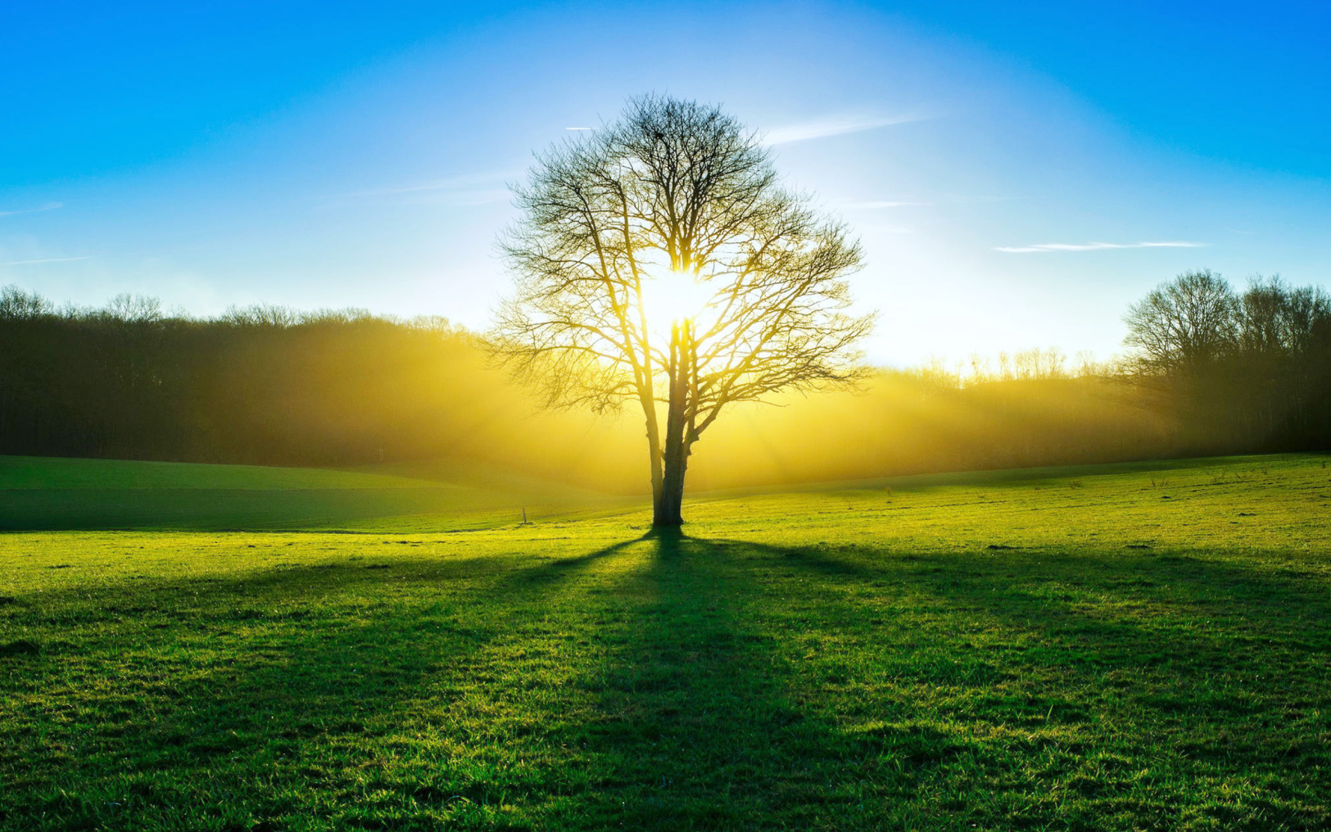 Why We Need More Sunlight – Vitamin D